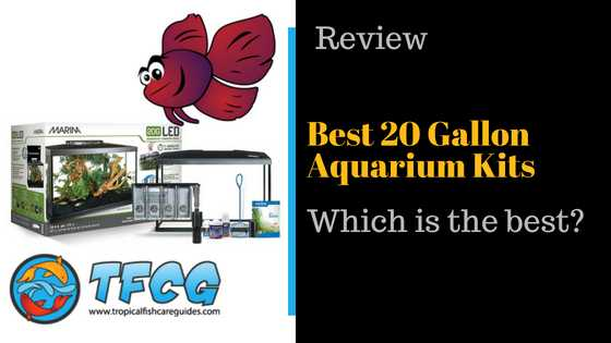 Best 20-Gallon Aquariums Reviews