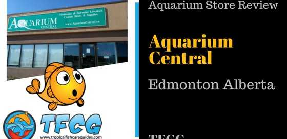 Best Aquarium Stores In Edmonton_ Aquarium Central [Store Review]