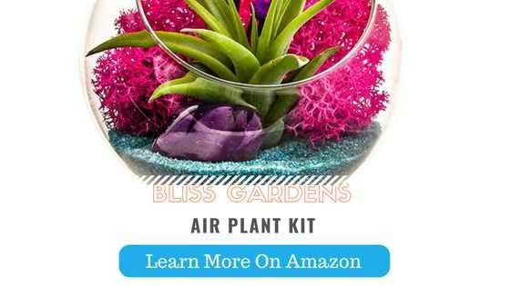 Best terrarium plant for non gardeners