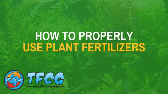 How to properly use plant fertilizers