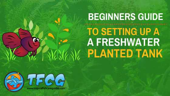 Live Freshwater Aquarium Plants For Beginners