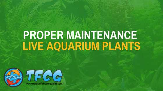 PROPER MAINTENANCE OF LIVE AQUARIUM PLANTS