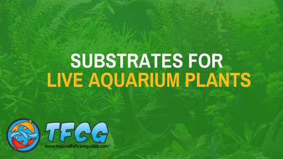 Substrate options for live aquarium plants