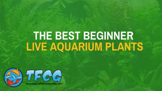 The Best Beginner Aquarium Plants