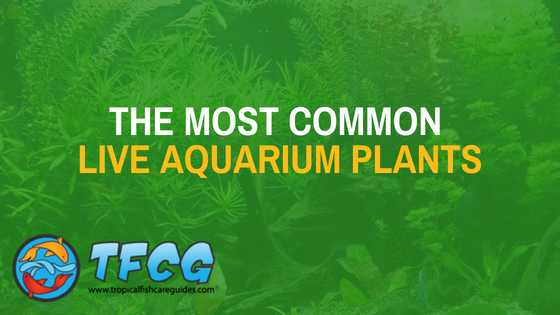 The Most common types of aquarium plants