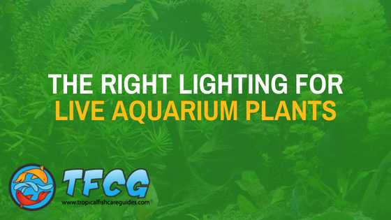The right lighting for live aquarium plants