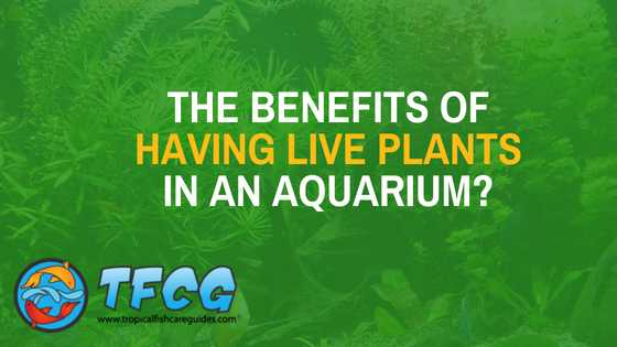 What are the benefits of having live plants in an aquarium_