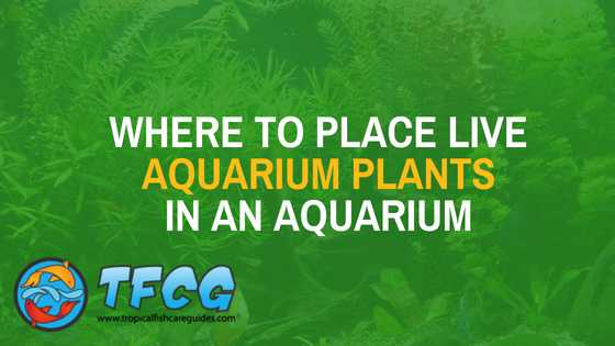 Where to place live aquairum plants in an aquarium