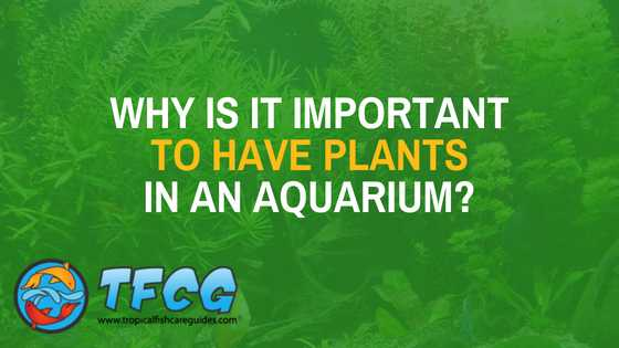 Why is it important to have plants in an aquarium_
