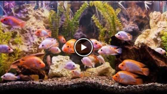 Best Fish Tank Filter Types