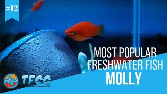 Freshwater Fish: Molly