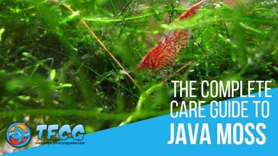 Java Moss: The Complete Care Guide