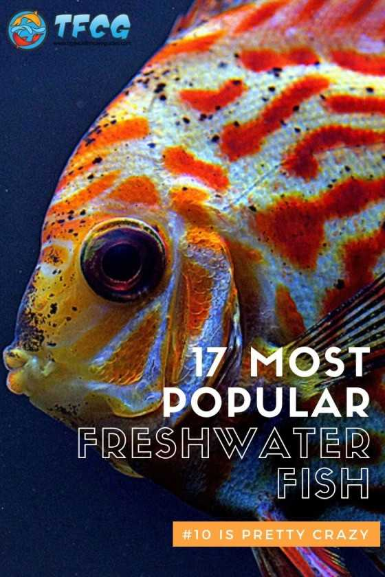 17 Of The Most Por Freshwater Fish