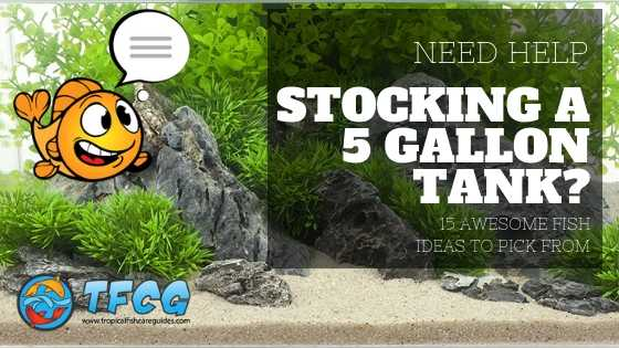 Need Help Stocking A 5 Gallon Tank_ 15 Awesome Fish Ideas To Pick From