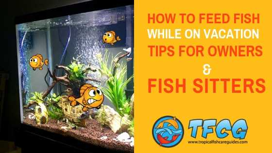 How To Feed Fish While On Vacation - Tips For Owners & Fish Sitters