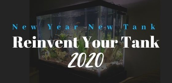 Aquarium Deals 2020