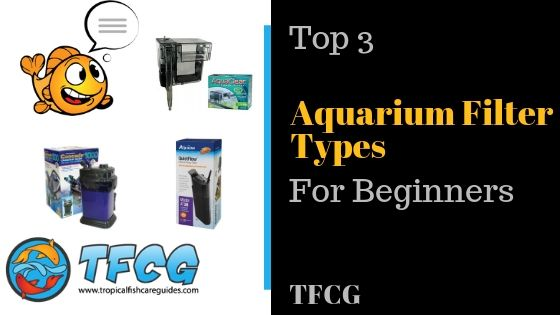 Aquarium Filter Types For Beginners