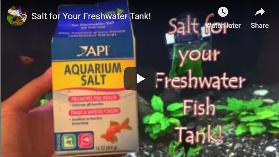 Aquarium Salt For Your Freshwater Aquarium Video