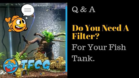 Do You Need A Filter For A Fish Tank_