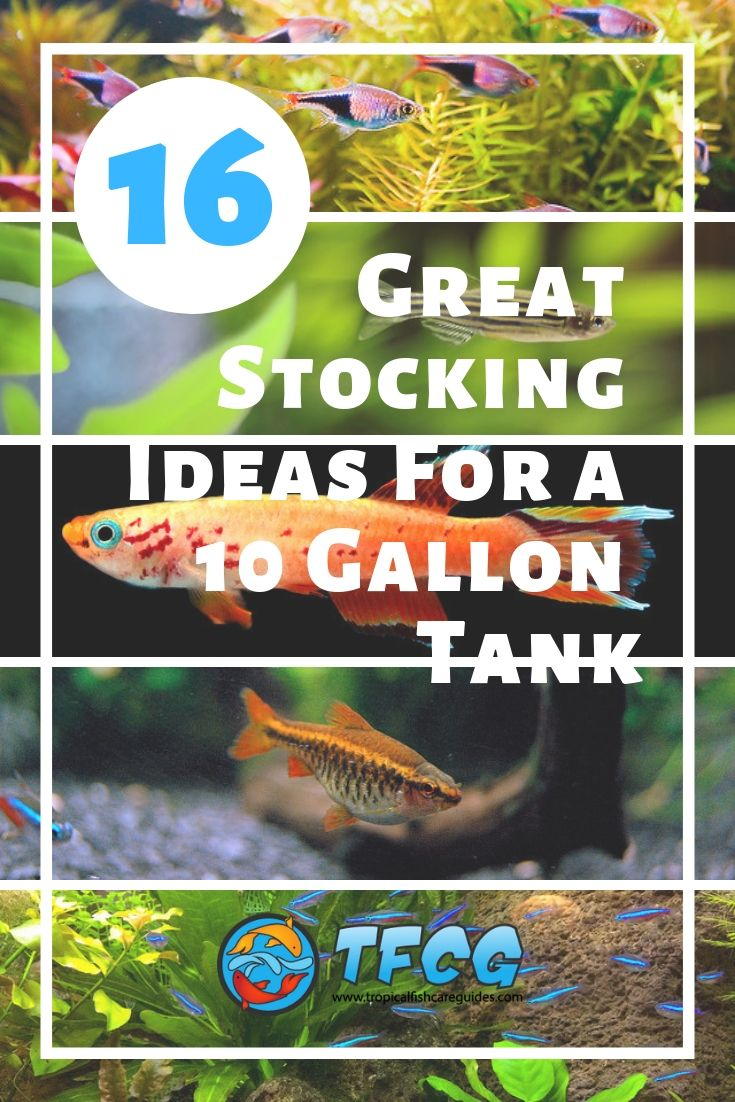 Stocking Ideas For A 10 Gallon Tank