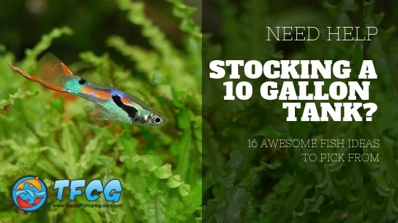 Need Help Stocking A 10 Gallon Tank 16 Awesome Fish Ideas Use