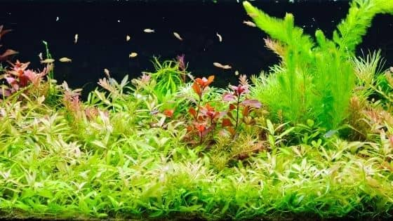 What To Look For In A Good Planted Aquarium Substrate