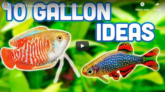 Stocking a ten gallon tank Ideas