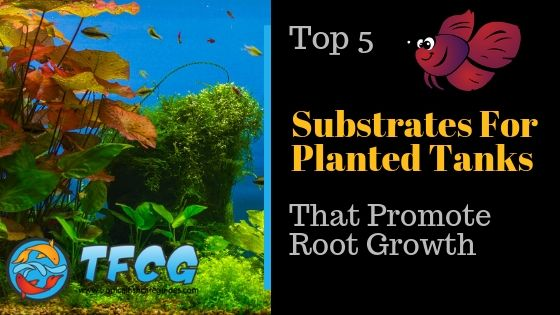 The Best Substrate For A Planted Tank. Top 5 List