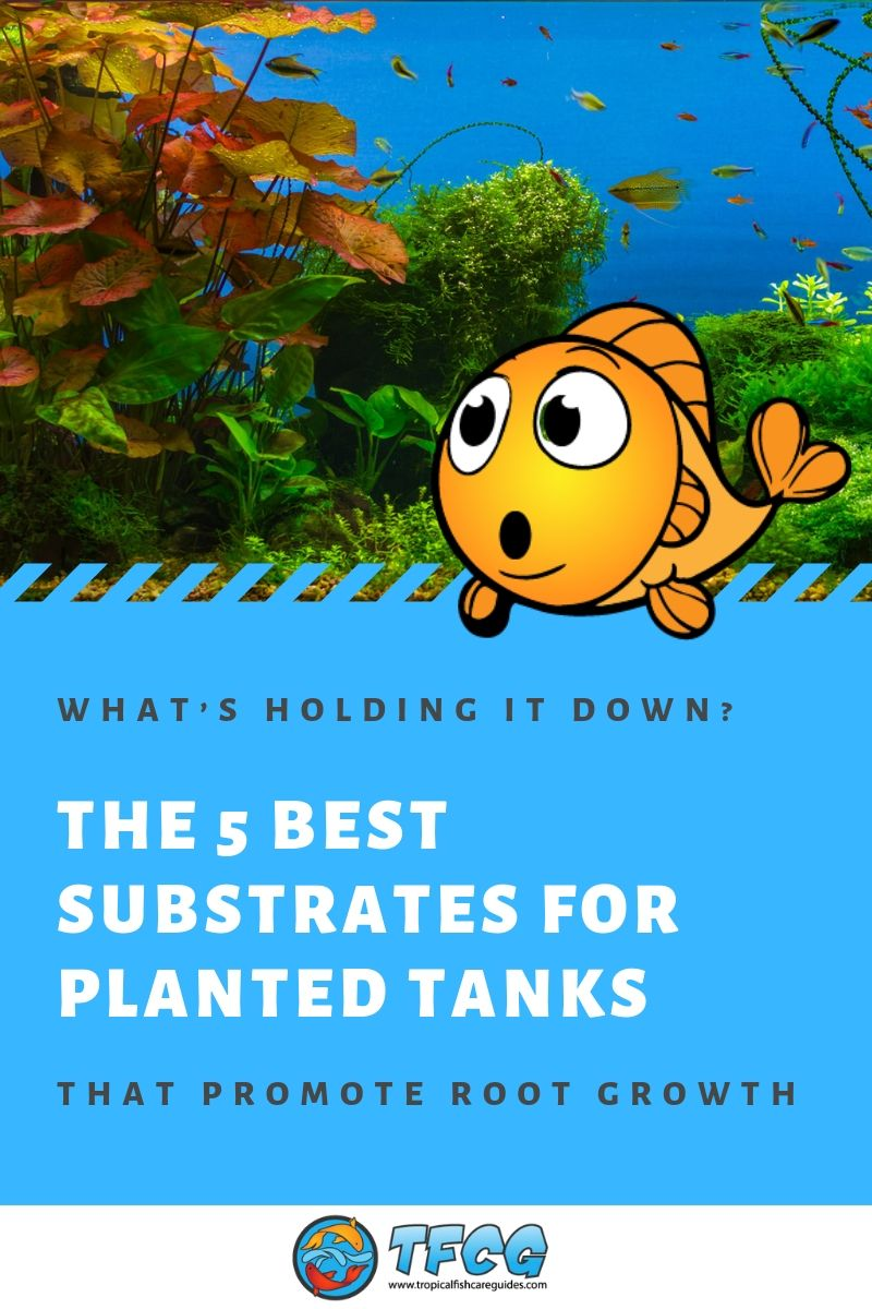 What's Holding It Down_ The 5 Best Substrates for Planted Tanks