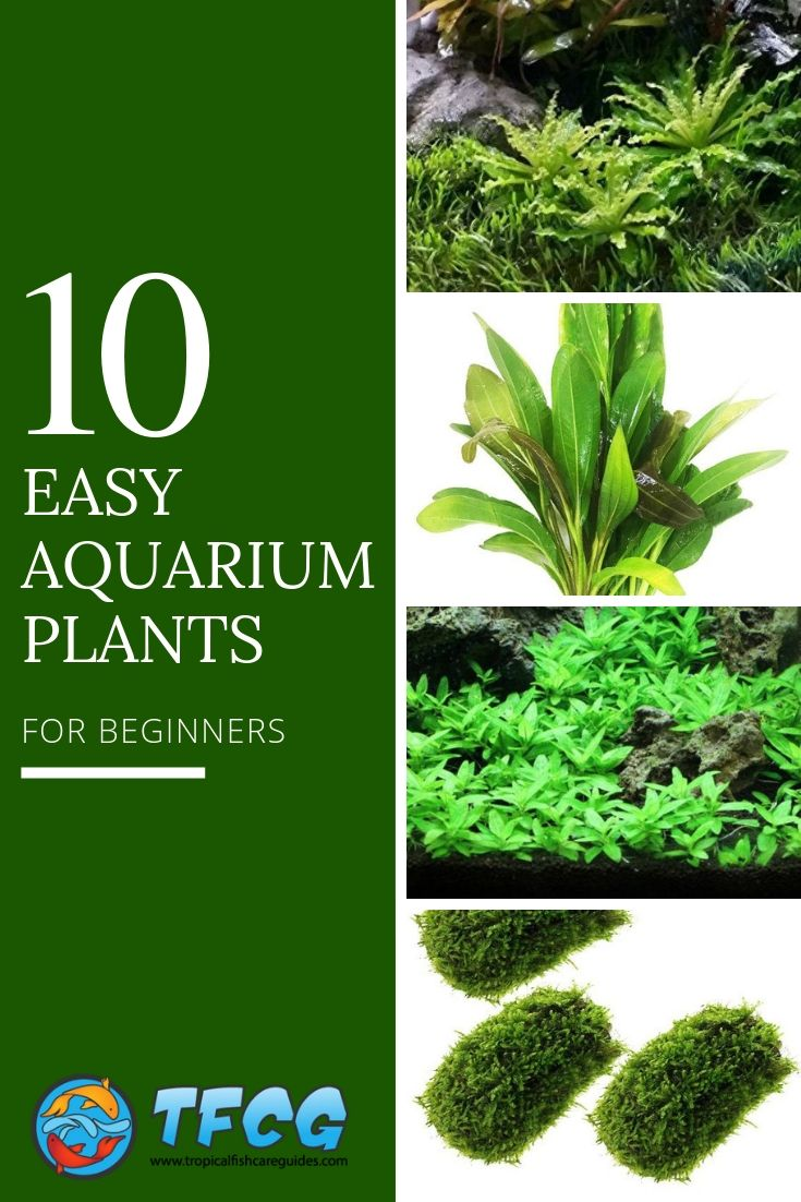 Best Aquarium Plants For Beginners