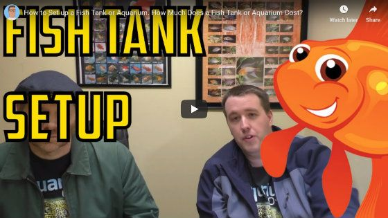 How Much Is A Fish Tank Setup - Video