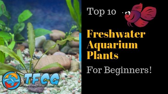 The Top 10 Best Freshwater Aquarium Plants for Beginners