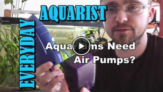 Do Aquariums Need Air Pumps Video