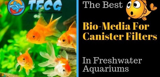 The Best Bio-Media For Canister Filters In Freshwater Aquariums