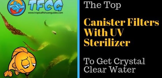 Top Canister Filters With UV Sterilizer Reviews [ Top Picks ]