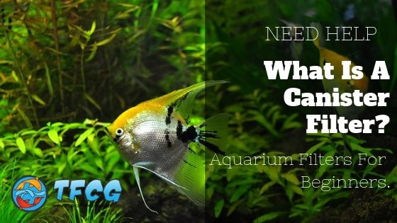 What Is A Canister Filter_ Aquarium Filters For Beginners.