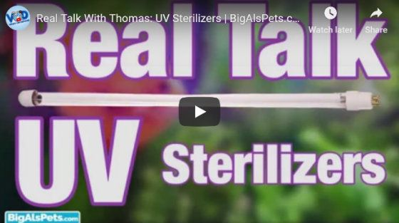 What is UV Sterilization Video