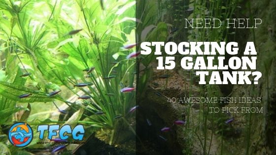 Stocking A 15 Gallon Tank Awesome Fish Ideas To Pick From Stocking A 15-gallon tank