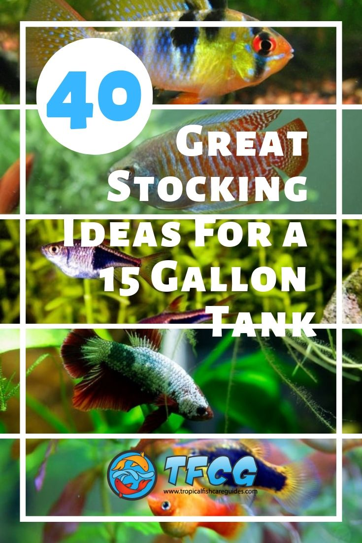 Stocking Ideas For A 15 Gallon Tank