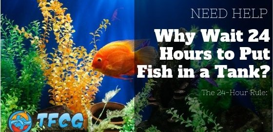 The 24 Hour Rule Why Wait 24 Hours to Put Fish in a Tank
