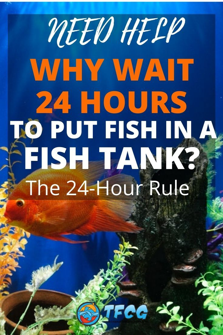 Why Wait 24 Hours to Put Fish in a Tank_