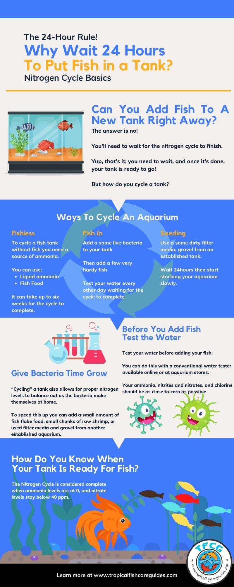 Infographic - How long to wait before putting fish in new tank.