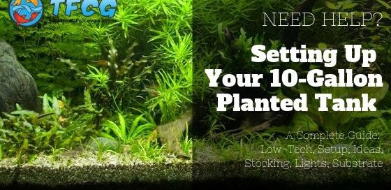 10 Gallon Planted Tank [Low-Tech, Setup, Ideas, Stocking, Lights, Substrate]