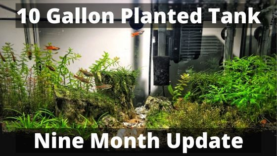 10 gallon planted tank nine month update