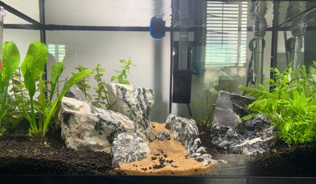10 Gallon Planted Tank After Week 2
