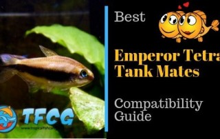 Compatibility Guide What Are the Best Emperor Tetra Tank Mates_