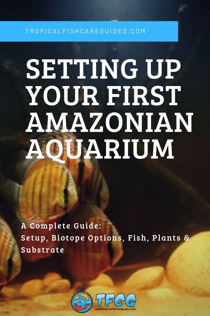 Setting up your first amazonian aquarium pin