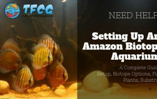 The Amazonian Aquarium Setup, Biotope Options, Fish, Plants, Substrate
