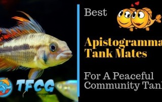 The Friendliest Apistogramma Tank Mates for a Peaceful Community Tank