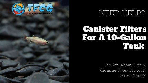 Canister Filter For A 10 Gallon Fish Tank